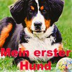 """""""Mein erster Hund – Ein Ratgeber von A bis Z"""" von Michael Schürz"""
